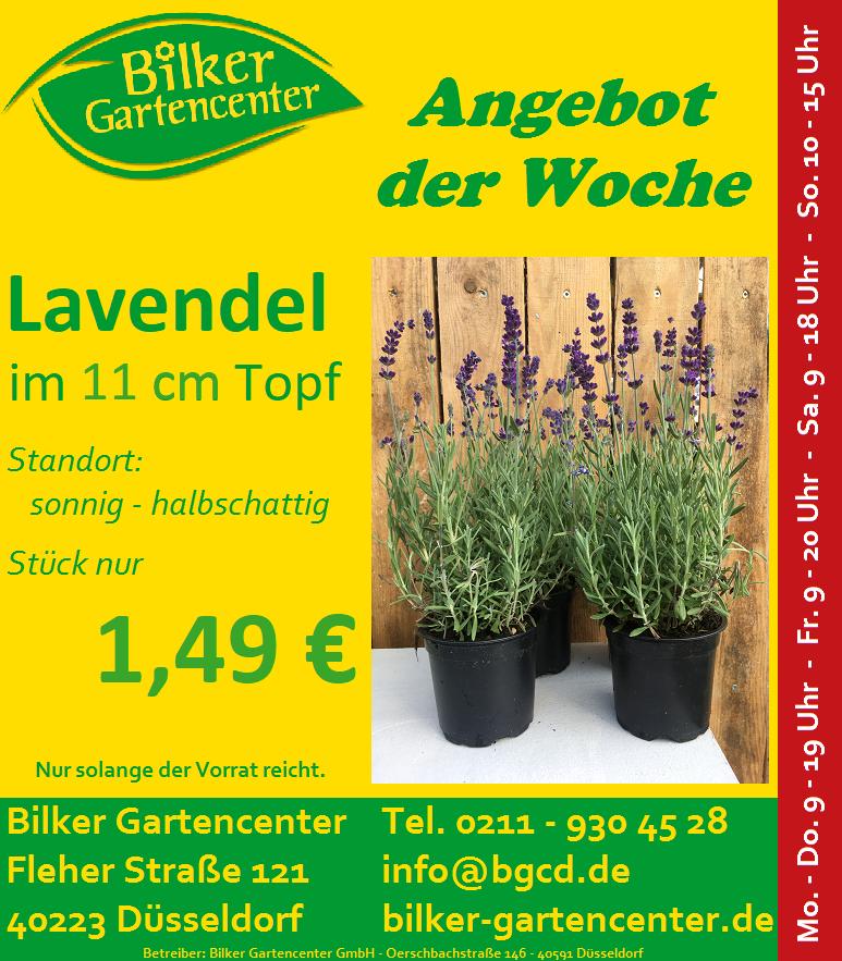 Lavendel-11er.png